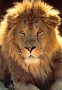 Unção do Leão – Vídeo, Bíblia e o que é